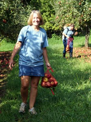 Apple Gleaning, Bedford VA