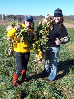 Turnip Gleaning in Riner VA