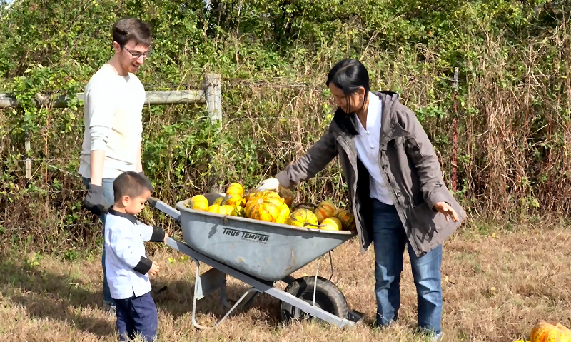 Learn About Gleaning In Tennessee