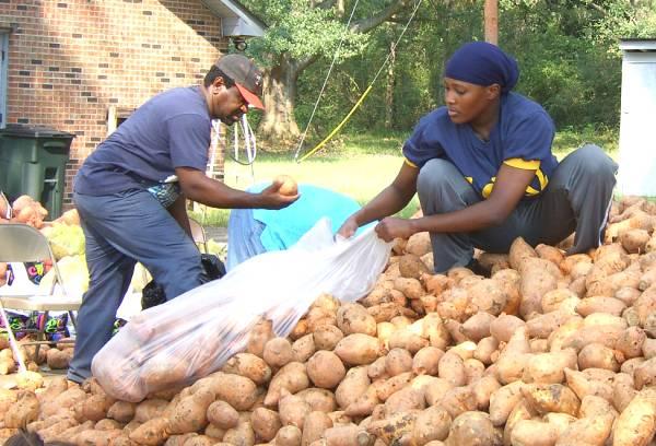 Packing Potatoes