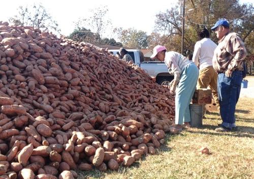 Big pile of sweet potatoes.