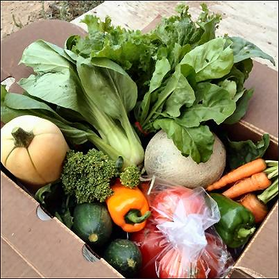 Box of Veggies