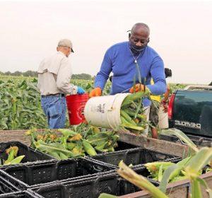 Donate Crops