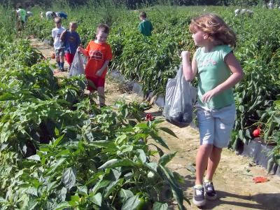 VA Commonwealth Day of Gleaning